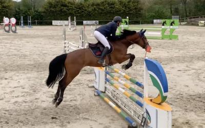 Les jeunes chevaux à Auvers