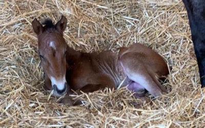 Foals 2020 : la génération des K arrive !